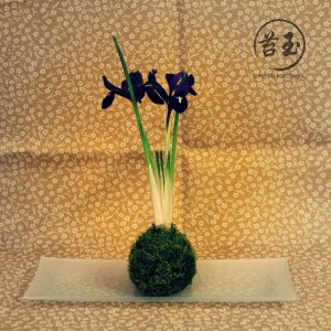 iris-kokedama-a-vendre-300x300.jpg